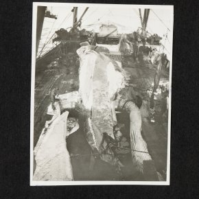 Bugges-album-6-022
