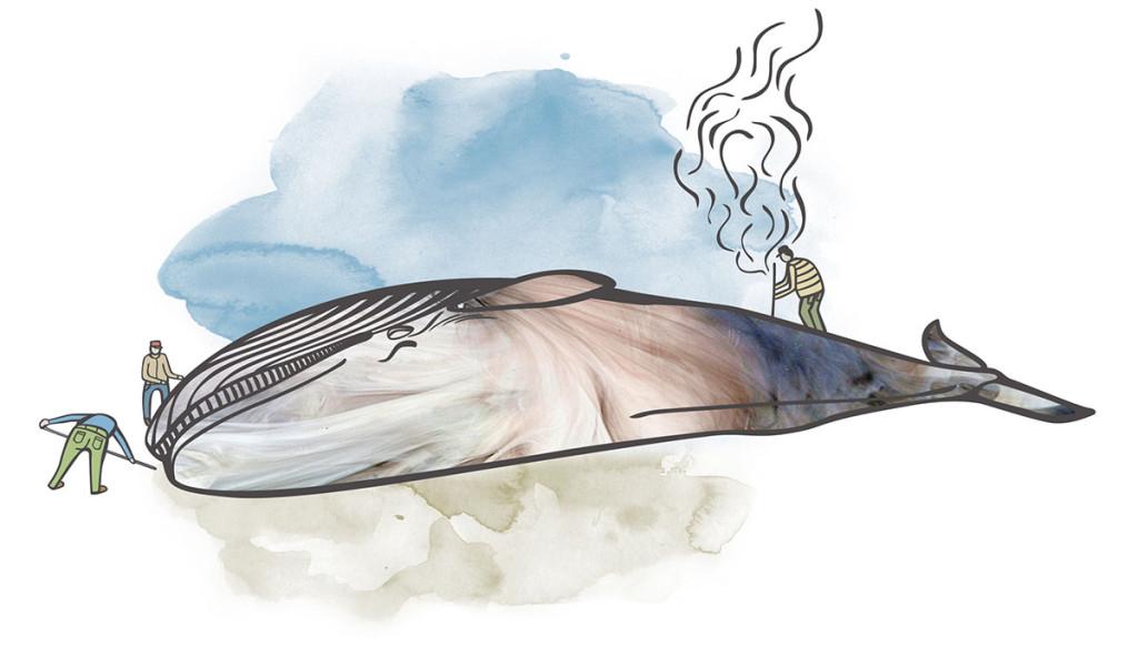 gc+VESTFOLDARKIVET-Whale-COLOUR-01_1200px