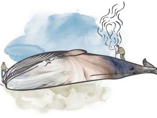 Fra landbasert til pelagisk hvalfangst