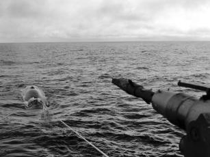 Regulering av hvalfangsten