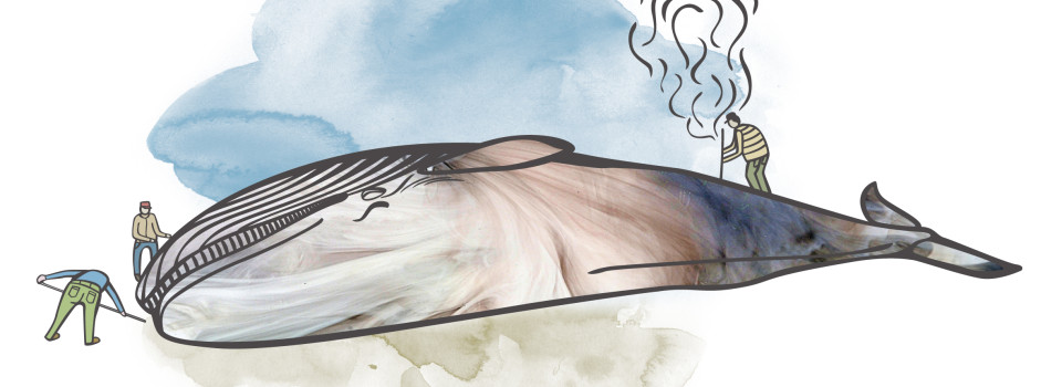gc+VESTFOLDARKIVET-Whale-01