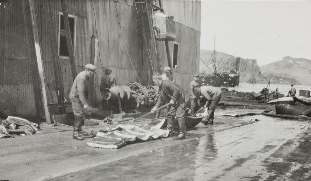 Hvalfangere arbeider med hvalen på land.