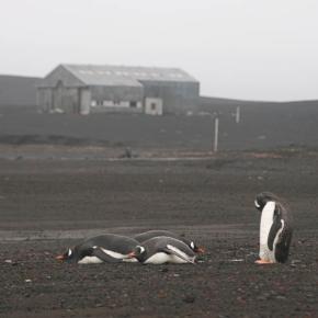 Fotograf-Rolf-Stange-pingviner-2004